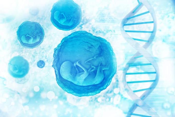 Acid folic có liên quan đến quá trình phân chia và nhân đôi tế bào. Xin nguồn ảnh.