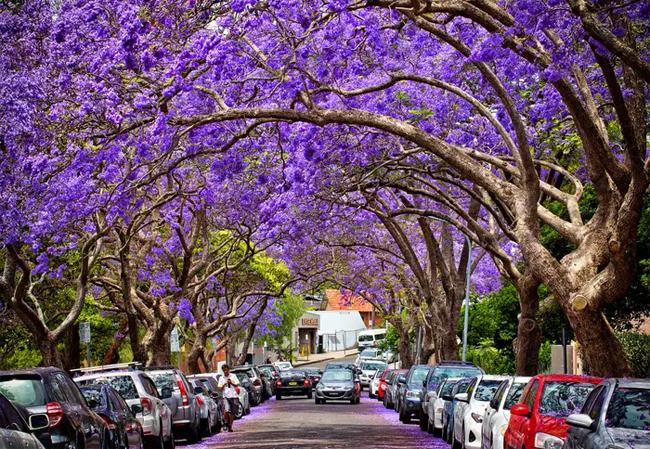 Người địa phương gợi ý những việc nên làm ở Sydney
