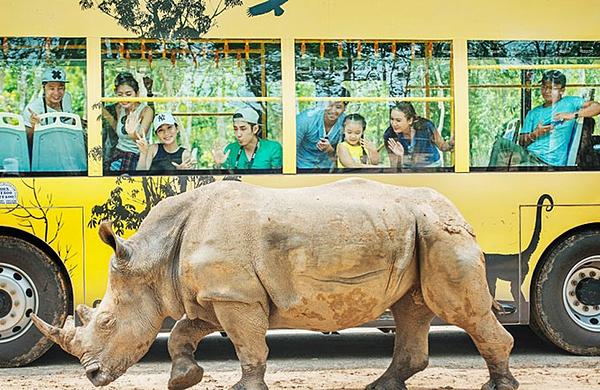 Đến với quần thể Vinpearl Phú Quốc, du khách còn nhiều hoạt động nên trải nghiệm tại Vinpearl Safari Phú Quốc như: chụp ảnh và tương tác cùng các bé hổ, vượn cáo đuôi khoang đáng yêu, ăn sáng cùng hươu cao cổ, hòa mình vào điệu nhảy Zulu hoang dã, tham quan vườn thú mở với mô hình nhốt người thả thú thú vị...