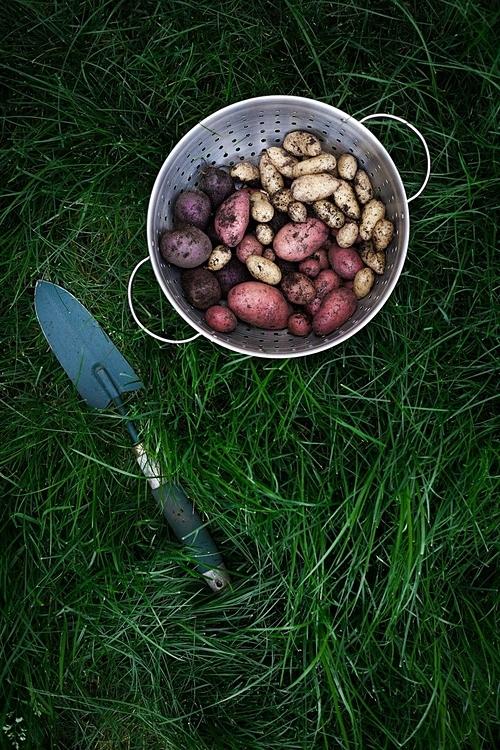 Không chỉ có rau, củ, trái cây mà Heidi còn trồng nhiều loại hoa xung quanh vườn.