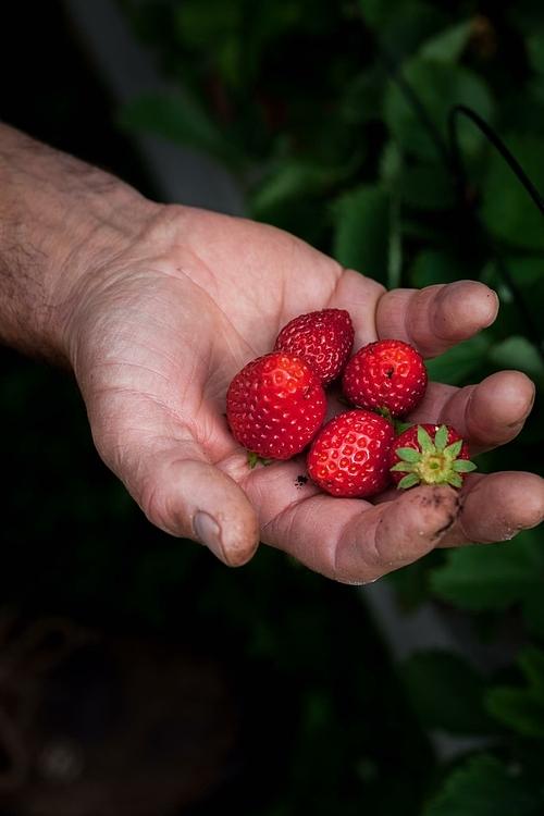 Ngoài việc có thể tự chủ nguồn thực phẩm, việc trồng trọt này còn tạo ra một tấm lá chắn để ngôi nhà của gia đình Heidi luôn mát mẻ.