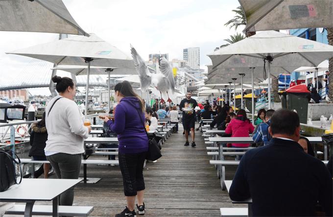 Đặc biệt, bạn còn được thưởng thức đồ ăn ở không gian mở bên bờ vịnh rất thoáng đãng trong lành. Tuy nhiên, hãy cảnh giác với những chú chim biển ở đây vì chúng nổi tiếng với khả năng cướp đồ ăn của du khách.