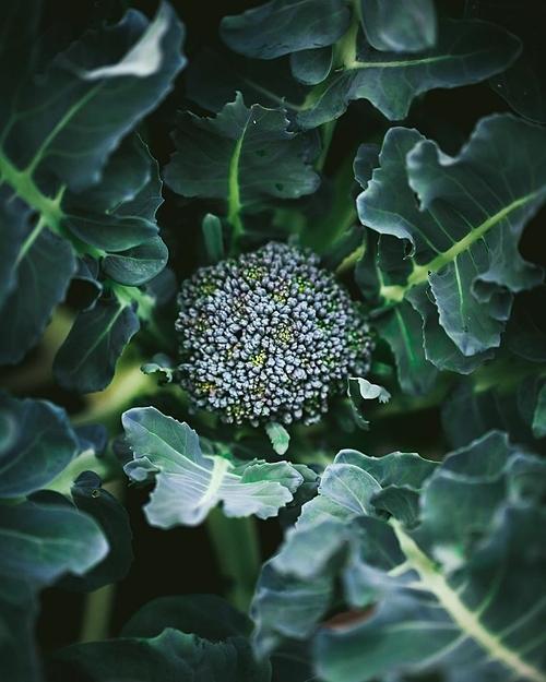 Khu vườn chỉ hơn 23 m2 nhưng mùa nào thức ấy, nó giúp cho thực đơn của gia đình Heidi thêm phong phú, độc đáo.