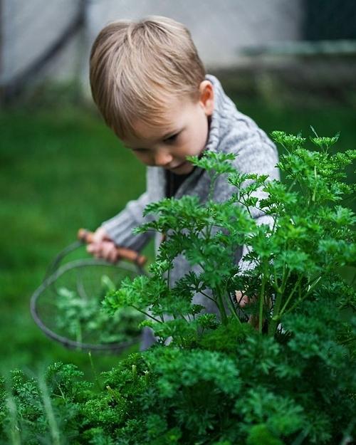 9 năm trước, khi chuyển đến sống tại Vancouver, Canada, Heidi đã chính thức bắt tay vào làm vườn. Tôi đã thực sự có thể để bàn tay của mình lấm lem đất và củng cố tình yêu với vườn tược, tự trồng các loại rau quả cho gia đình, bà mẹ một con cho biết.