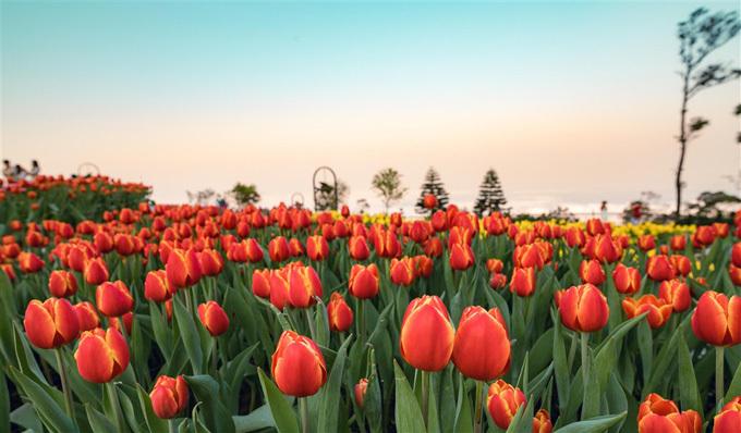 Tới đỉnh Bà Nà, du khách có cơ hội vui chơi theo mùa. Bốn mùa tại Bà Nà Hills được định nghĩa bằng mỗi lễ hội, với những sắc màu và đặc điểm khác nhau. Mùa xuân được đặc tả bằng những lễ hội hoa rực rỡ. Năm nay, Bà Nà mang cả một góc Hà Lan vàtrăm loài hoa khác về đặt trên đỉnh núi Chúa. Lễ hội hoa xuân thu hút nhiềudu khách tới đây.