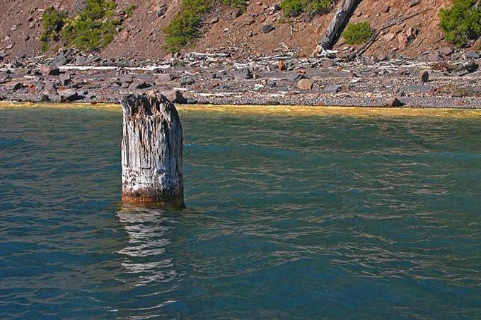 Thân cây nổi thẳng đứng trên mặt hồ Crater, Mỹ trong khi không có gì neo giữ nó bên dưới mặt nước. Ảnh:Markgozynski.