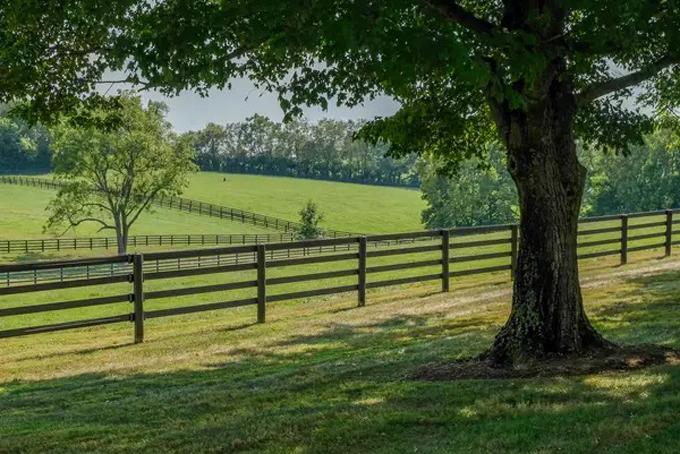 Khuôn viên rộng lớn với những bãi huấn luyện ngựa được chăm sóc kỹ lưỡng đượcbao quanh bởi những hàng cây cao lớn. Ảnh: BI.