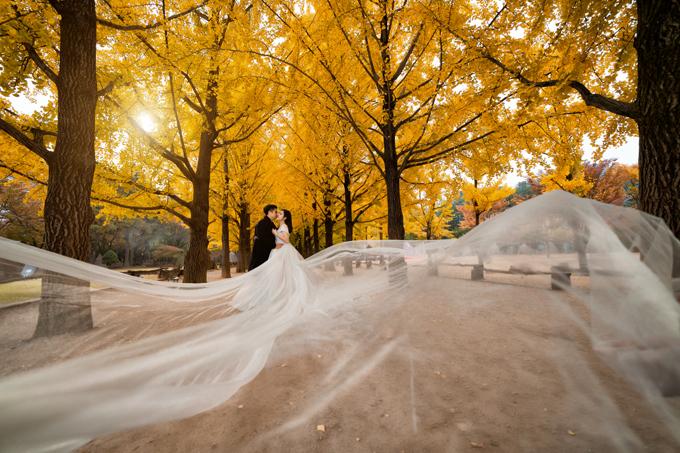 Tấm voan cưới, thảm lá vàng đang dần chuyển màu trong tiết trời thu đảo Nami giúp bức ảnh của cặp vợ chồng thêm ấn tượng.
