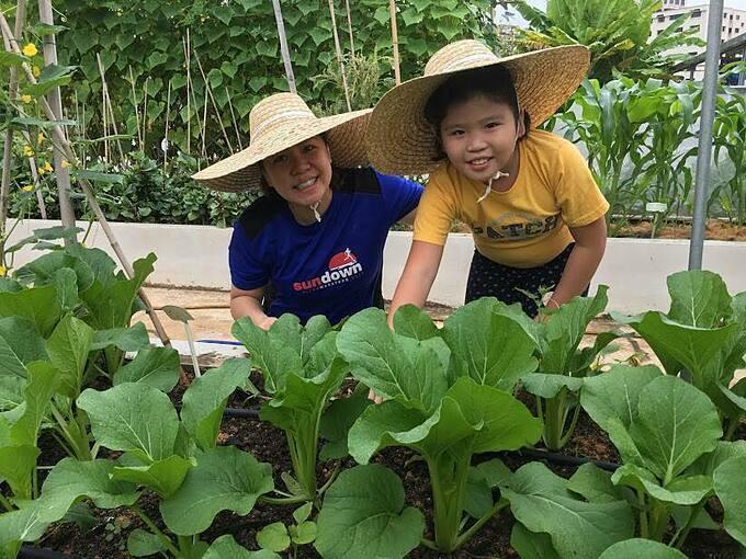 Cô Lyvenne phân các học sinh của mình thành từng nhóm 4 em. Mỗi nhóm được giao phụ trách một ô đất kích thước 1m x 1m và các em tự quyết định sẽ trồng loại cây gì. Các học sinh cũng sẽ chịu trách nhiệm từ A đến Z từ khi bắt đầu trồng tới lúc thu hoạch.