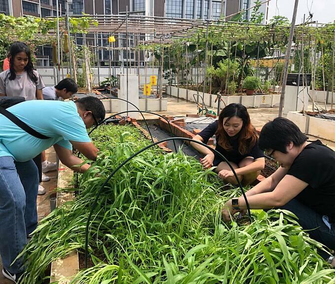 Hoạt động này đã nhận được sự ủng hộ từ các tình nguyện viên là cha mẹ học sinh, giáo viên trong trường cả cư dân xung quanh trường học. Mỗi sáng thứ 7, họ đều cùng nhau lao động trên khu vườn sân thượng. Họ làm đất, nhổ cỏ, trồng cây cũng như mở các phiên chợ bán hàng...