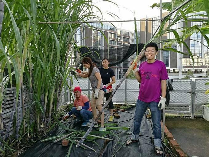 Các học sinh của cô sau khi tự trồng cây, gieo hạt và chăm sóc thì sẽ được thưởng thức một phần các sản phẩm thu hoạch từ vườn.