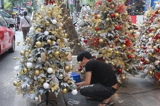Cây thông Noel được nhiều người chọn mua để trang trí giáng sinh cho gia đình. Ảnh: Nguyễn Ngoan