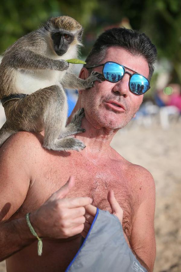 Chú khỉ cầm chiếc lá, ngồi vắt vẻo trên vai ông trùm truyền thông Mỹ và không chịu xuống.