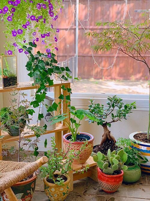 Nơi đây ban đầu là một căn phòng trống, vợ chồng Quỳnh Hương đã thay thế toàn bộ các bức tường bao quanh bằng kính để tối đa khả năng hứng nắng và phù hợp cho việc trồng cây. Bà mẹ một con mê sưu tầm đồ gốm, sứ, hoa lá nên trong nhà chị không bao giờ thiếu những mảng màu sắc giàu sức sống.