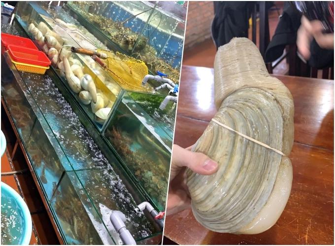 Là một tín đồ ẩm thực, Minh Anh khá thích thú khi đến thiên đường đồ biển, thưởng thức đủ loại hải sản tươi. Cô khoe con ốc vòi voi cỡ lớn trên trang cá nhân. Ở Nha Trang, giá trung bình cho 1 kg ốc vòi voi khoảng 1 triệu đồng. Một con to có thể đủ cho 2 người ăn, thích hợp để nấu các món như nướng, xào...