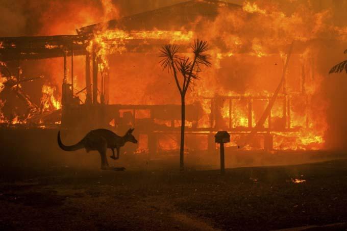 Cháy rừng ở Australia hiện là vấn đề được cả thế giới quan tâm, khi kể từ tháng 9 đến nay, khoảng nửa tỷ động vật, gồm các loài có vú, chim và bò sát, đã bị xóa sổ. Trong vài ngày qua, các trận cháy lớn đã hoành hành bang Victoria và New South Wales, khiến vài người tử vong hoặc mất tích.