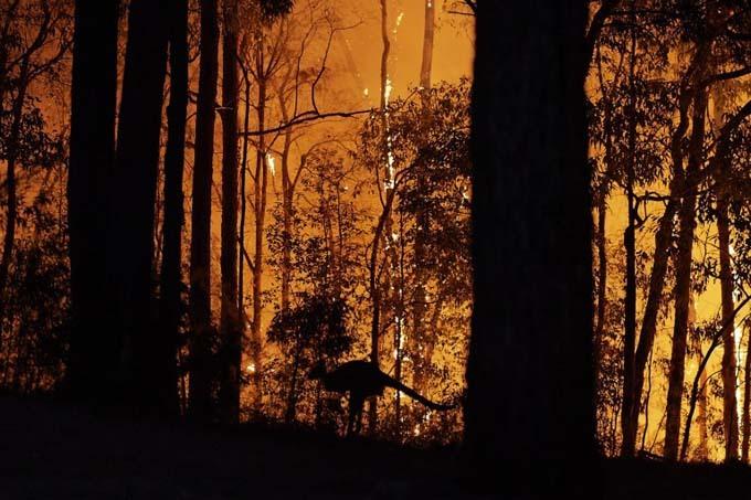 Cháy rừng kỷ lục đã khiến bầu trời Australi chuyển thành màu đỏ như máu, giống như trong các bộ phim kinh dị.