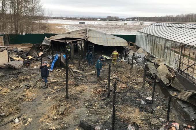 Hiện trường vụ cháy nhà kính ở Ramenskoye, ngoại ô Moskva,hôm 7/1. Ảnh: AP.