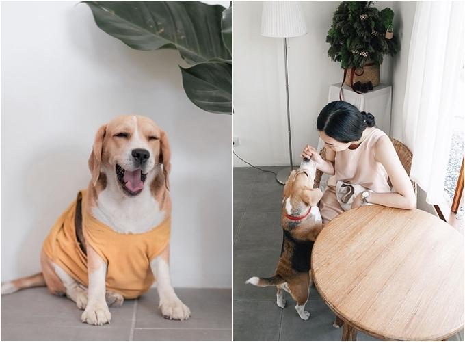 Chú chó beage - nhân viên đặc biệtcủa quán -luôn biết cách lấy lòng khách, dễ làmphái nữ mềm lòng.