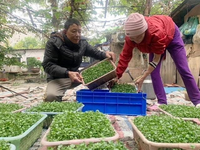 Nhiều người trong xóm bệnh nặng không thể đi làm tranh thủ trông rau mầm mang bán kiếm thêm tiền thuốc men. Ảnh: Nguyễn Ngoan