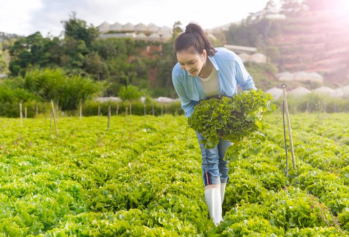 [Caption] Dù bận rộn với nhiều công việc tại TP.HCM và di chuyển công tác nước ngoài nhưng Lý Nhã Kỳ vẫn dành rất nhiều thời gian lên Đà Lạt để cùng nhân viên trồng khu vườn hoa cổ tích cho Orion Resort của cô. Lý Nhã Kỳ luôn thích tự tay làm mọi việc, cô tự tay hái những quả cà chua Thân gỗ. Mỹ nhân gốc Vũng Tàu thoải mái thưởng thức chúng tại vườn. Bên cạnh đó, cô cũng trực tiếp xuống vườn cắt rau xà lách, dù mệt đổ mồ hôi nhưng Lý Nhã Kỳ vẫn rất rạng rỡ.
