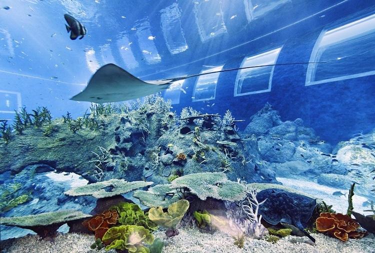 S.E.A. Aquarium mang đến cho du khách cảm giác như đang dạo chơi dưới đáy đại dương với hơn 100.000 sinh vật biển. Ảnh: Courtesy of Resorts World Sentosa.