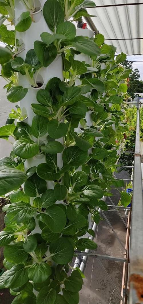 Tổng trọng lượng vườn rau của anh Dương cỡ 4-5 tấn, chưa kể 3 bồn cá trên mái tôn nhà kho. Do đó, anh đã phải tính toán sao cho kích thước vườn rau hợp trọng tải của mái, gia cố chắc chắn mái tôn.