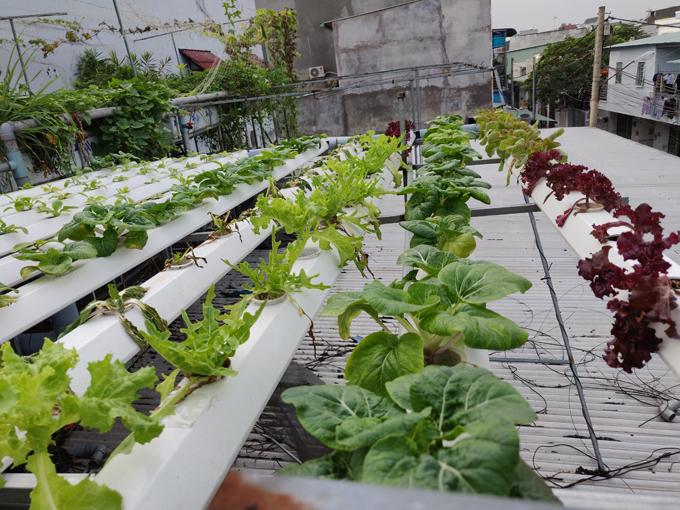 Anh chia vườn thành 2 khu vực để tận dụng tối đa các khoảng trống trong ngôi nhà. Khu vực đầu tiên ở trên mái nhà kho để nuôi cá, trồng rau và vài loại quả theo mô hình aquaponic. Anh lựa chọn các loại rau: diếp cá, rau ngót, các loại cải, xà lách, rau muống, rau cần, rau gia vị, su hào.