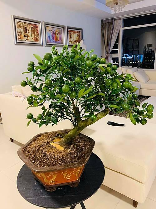 Tuy có nhiều năm sống ở nước ngoài và kết hôn với chồng ngoại quốc nhưng Như Vân rất yêu văn hóa truyền thống. Cácloại cây, hoa, đồ trang trí gắn với Tết cổ truyền đều được sắp xếp ở những góc nhỏ xinh trong ngôi nhà của gia đình chị tại TP HCM.