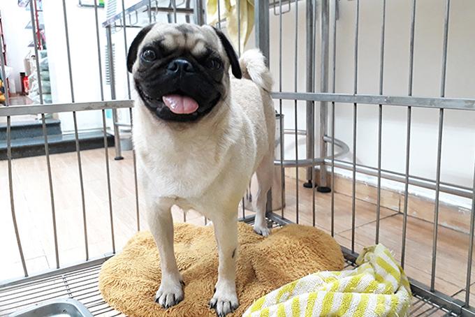 Thú cưng được gửi tại một bệnh viện chăm sóc chó mèo ở TPCHM. Ảnh: Petcare.
