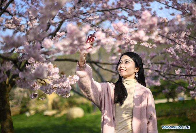 Thành phố Vũ Hán là địa điểm du lịch mùa xuân nổi tiếng bởi những vườn hoa anh đào thơ mông.