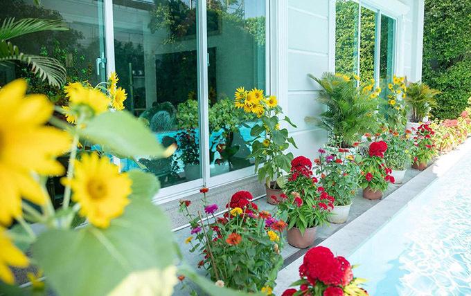 Quách Ngọc Ngoan trang trí biệt thự theo phong cách người miền Nam với đủ loại hoa từ mào gà, hướng dương, cúc đại đoá, thược dược...