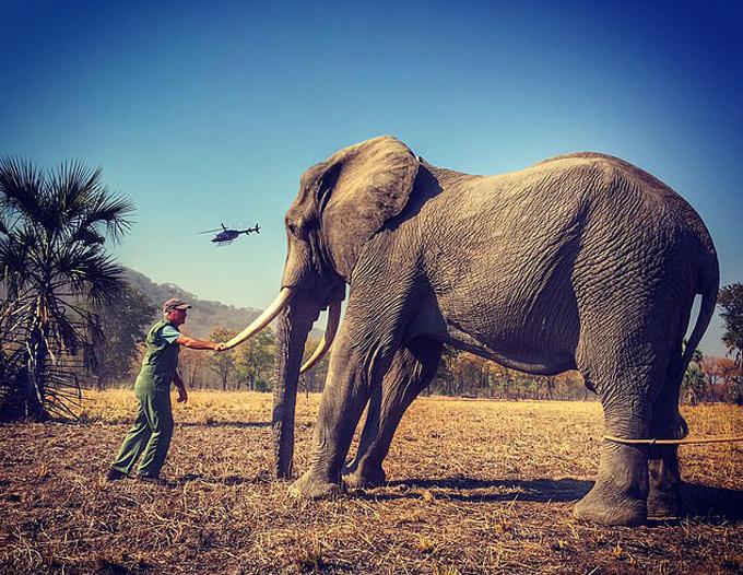 Ảnh gốc con voi do Hoàng tử Harry chụp tại khu bảo tồn động vật hoang dã ở châu Phi. Ảnh: Mail.