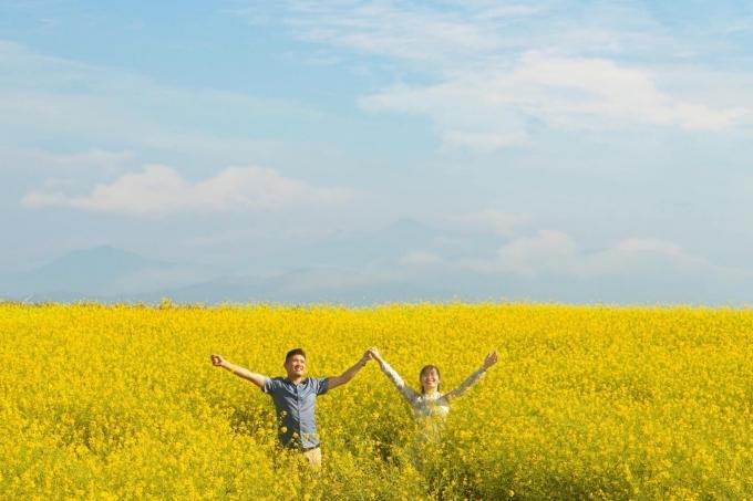 Những năm trước, đây là mùa du lịch cao điểm củanông trại vì nhiều loài hoa nở cùng lúc, thời tiết thuận lợi, dễ chịu. Tuy nhiên năm nay,do dịch viêm phổi nCoV nên không quá đông du khách, bạn có thể thoải mái chụp ảnh. Hoa cải vàng kết hợp với nền trời xanh tạo nên bức tranh đẹp mắt.Ảnh Đồng Ngô