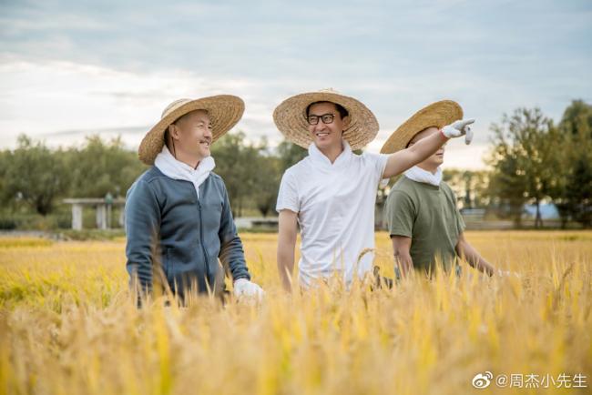 Châu Kiệt trên cánh đồng lúa của công ty anh.