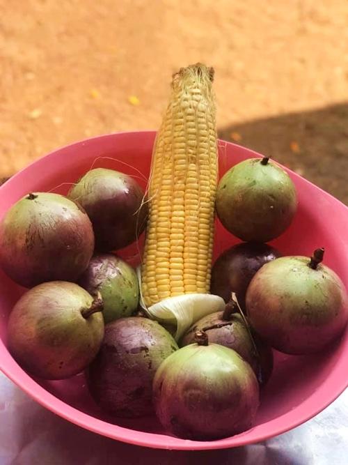 Mít và vú sữa là hai loại trái cây nữ diễn viên thu hoạch được nhiều nhất dịp gần Tết. Khoảng giữa năm, cô có được mấy bao chôm chôm từ ba cây sai quả trong vườn.