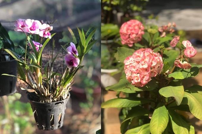 Hoa hồng nở bung, hương thơm ngọt ngào tạo điểm nhấn cho khu vườn. Ngoài ra, chị còn trồng hoa súng, 60 giò hoa lan, hoa quỳnh anh, ti gôn, hoa cúc