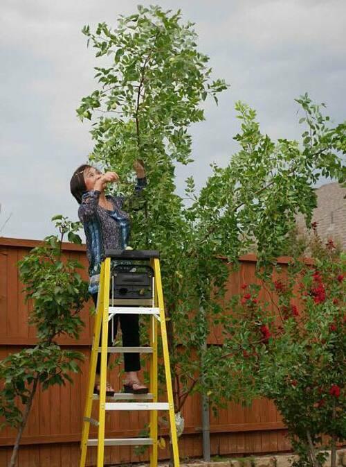 Ngoàihoa, rau xanh, Sally và mẹ còn trồng táo và các loại cây ăn quả.