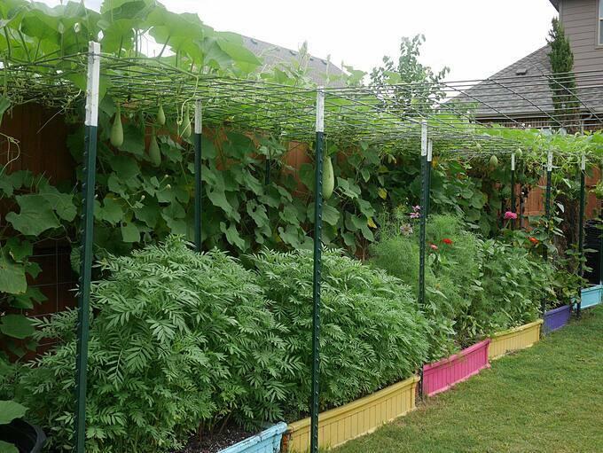 Gia đình Sally Nguyên trồng rất nhiều loại rau, rau gia vị và thảo mộc châu Á. Những bữa tối của họ luôn được nấu từ những nguyên liệu có sẵn trong khu vườn.