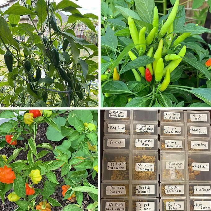 Không chỉ tự duy trì nguồn rau sạch của mình, gia đình Sally còn tham gia vào các hoạt động tình nguyện tại địa phương, tặng hạt giống, rau xanh miễn phí cho những người cần...