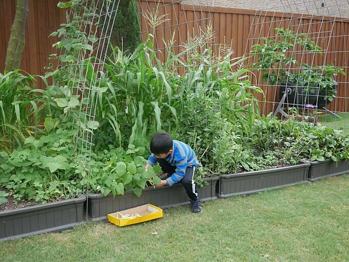 Làm vườn là hoạt động chung của cả gia đình chúng tôi. Các con tôi học được nhiều điều từ bà ngoại và bà họ. Kinh nghiệm lớn nhất tôi có được là nên trồng rau cùng với trồng hoa. Bởi trong vườn có nhiều loại hoa sẽ thu hút côn trùng thụ phấn và tạo ra một khoảng sân tuyệt vời với nhiều màu sắc, bà mẹ gốc Việt chia sẻ.