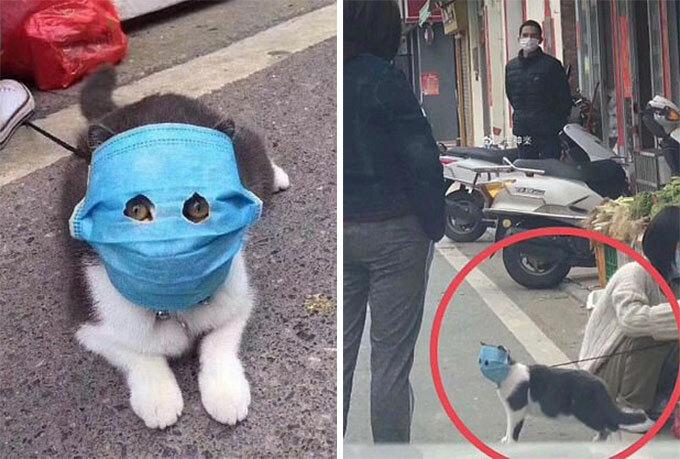 Con mèo được khoét hai lỗ chỉ vừa đủ để nhìn đường khi đeo khẩu trang ở Trugn quốc. Ảnh: Weibo.