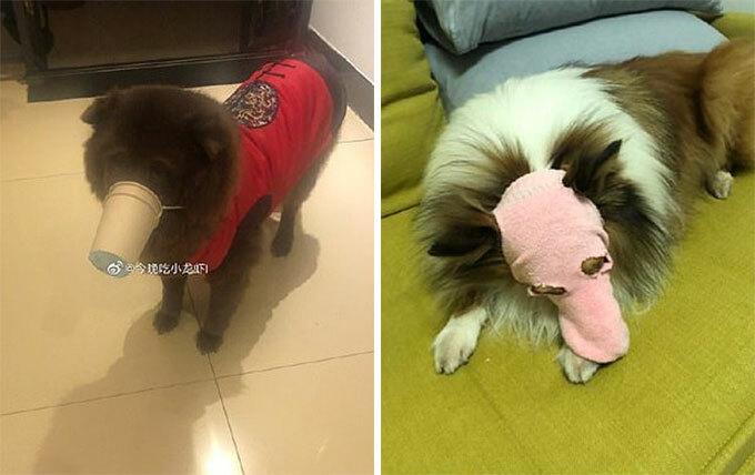 Khẩu trang tự chế bằng cốc giấy và tất dành cho cún. Ảnh: Weibo.