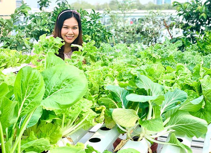 Vườn rau cải ngọt, cải xoăn, xà lách cũng được canh tác kiểu thuỷ canh vàđang phát triển xum xuê.