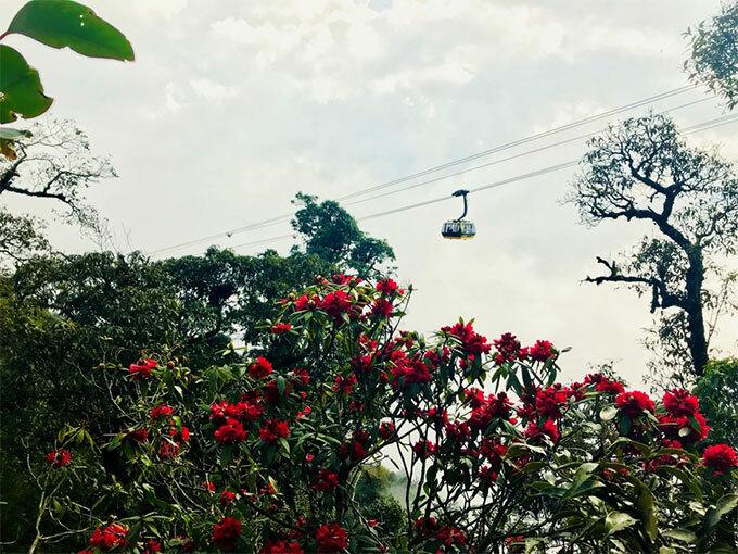 Đỗ quyên rừng Hoàng Liên năm nay nở sớm. Từ độ cao 2.000 m, qua khung cửa cabin cáp treo, du khách có thể thấy những vòm hoa đỏ, hoa hồng, hoa tím... Bên cạnh đó, đỉnh Fansipan mùa xuân là mùa chiêm bái quần thể tâm linh, cầu bình an hạnh phúc cho lứa đôi, gia đình, trong sự tĩnh tâm tự tại giữa thiên nhiên, giữa chốn Phật cảnh tiên an lành.