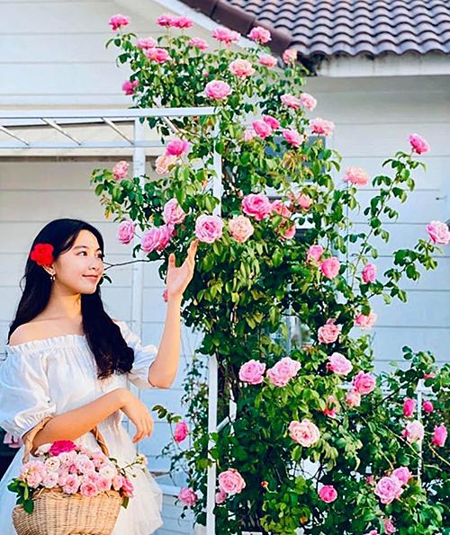Con gái Quyền Linh ngắm hoa hồng trước khigiúp mẹ thu hoạchđể làm trà. Bé Lọ Lem được khen ngày càng ra dáng thiếu nữ xinh đẹp. Dạ Thảo - bà xã nam MC -kể về giống hoa: Soeur Emmanuelle nhà mình sau hơn một năm kể từ ngày được trồng giờ đã cao lớn, hoa nở từ gốc đến ngọn như thế này đây. Mình đặc biệt mê giống hồng Pháp này. Dáng hoa đẹp, cánh dày với màu hồng sen rực rỡ lúc vừa nở và nhạt dần khi gần tàn. Hương thơm ngọt ngào, tinh tế. Hoa sai, to, khoảng 5 tuần cây ra một đợt hoa, cây liên tục bật chồi mới.