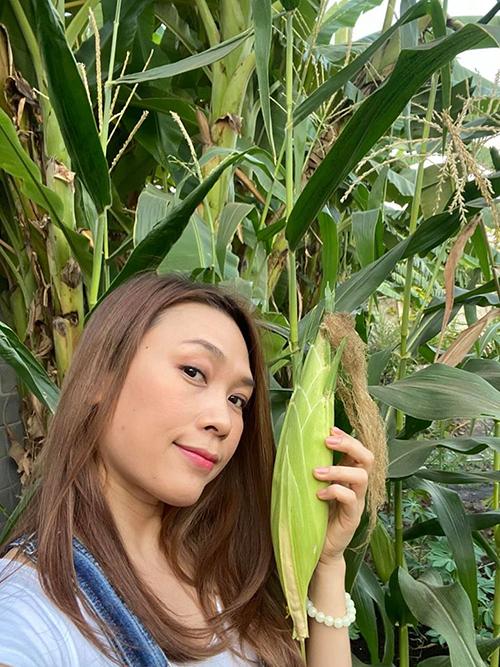 Mỹ Tâm thu hoạch bắp trong vườn nhà.