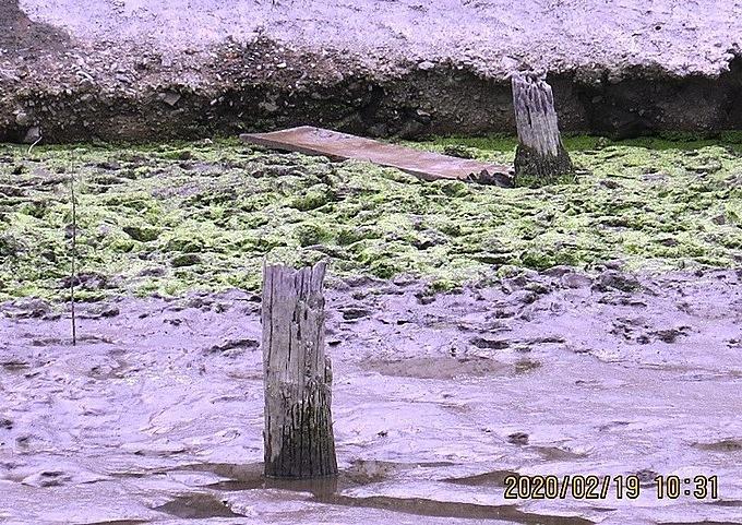 [Sau khi về khảo sát, lấy mẫu 3 cọc để xác định niên đại bằng phương phóng xã pháp đồng vị cát con, các nhà khoa học nhận được đây là bãi cọc cổ liên quan đến chiến thắng Bạch Đằng Giang năm 1288 của quân và dân nhà Trần. Ảnh: Giang Chinh