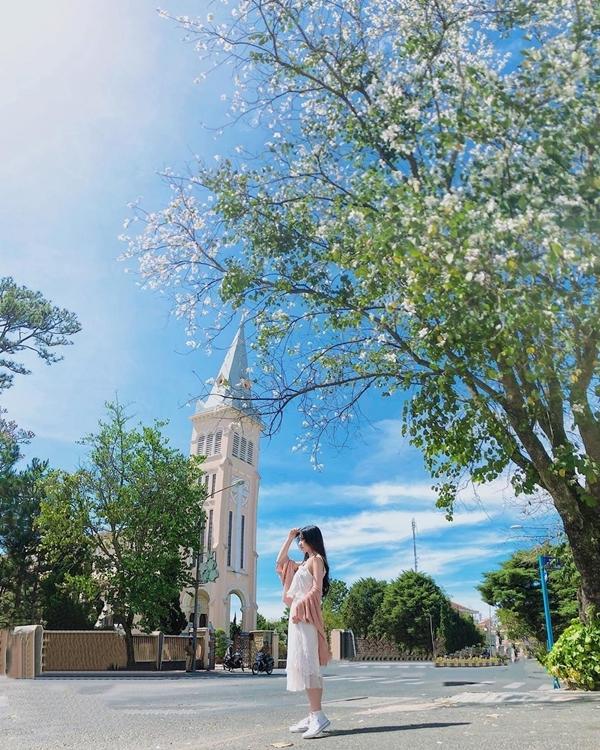Ngoài ra, đường Trần Phú trước nhà thờ là một trong những điểm săn hoa ban đẹp nhất ở Đà Lạt vào mùa xuân. Độ tháng 1 hằng năm, nhiều bạnđến đây check-invới .Ảnh daomaiphuong04