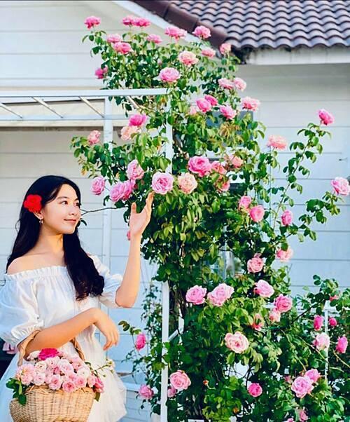 Yêu cái đẹp, thiên nhiên, cỏ cây hoa lá nên chị Dạ Thảo - bà xã của MC Quyền Linh luôn cố gắng cân bằng mọi việc để dành thời gian cho niềm đam mê trồng trọt và chăm sóc những khóm hoa hồng. Chị cũng truyền tình yêu này cho ông xã và hai con gái Lọ Lem (Thảo Linh) - Hạt Dẻ (Thảo Ngọc). Sân thượng với hàng trăm gốc hồng ngoại và hồng cổ được chị Dạ Thảođặt tên Khu vườn của Ngọc - Thảo - Linh không lúc nào thiếu vắng hương thơm, sắc màu. Trong ảnh là con gái lớn Lọ Lem của vợ chồng Dạ Thảo - Quyền Linh.